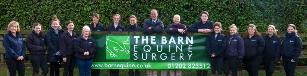 the barn equine surgery aboutabout
