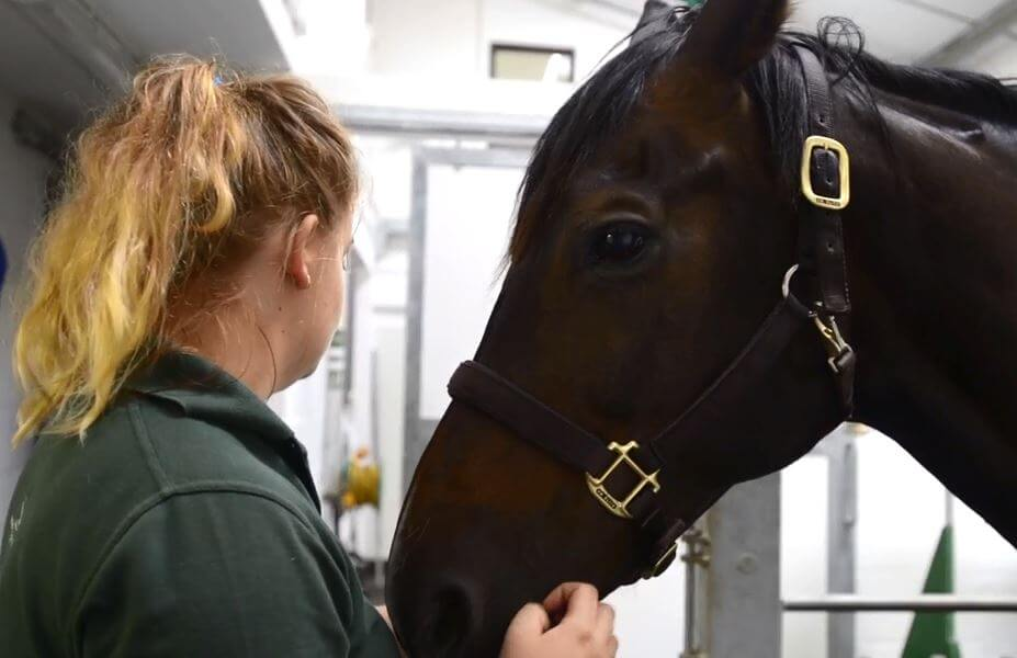 The Barn Equine Surgery | Surgical Care