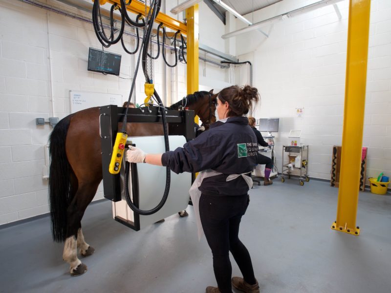 The Barn Equine Surgery | Services