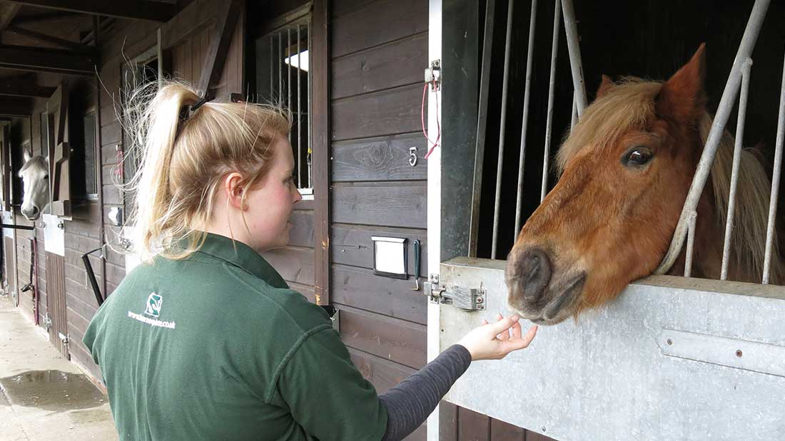 equine-in-patient-care